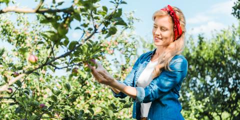 3 Diseases That Target Apple Trees, Kalispell, Montana