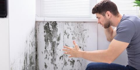 How to Prevent Mold in Your Rental Property, Kalispell, Montana