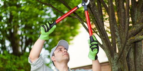 4 Benefits of Tree Pruning, Kalispell, Montana