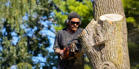 3 Reasons You Should Consider Tree Removal, Kalispell, Montana
