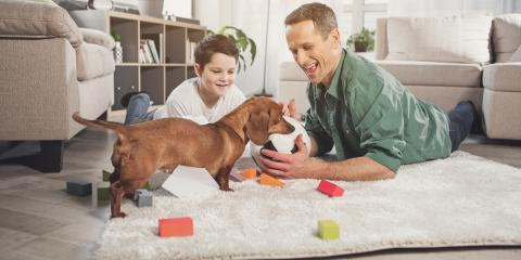 Rug Cleaning Tips for New Puppy Owners, Kalispell, Montana