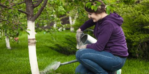 3 Helpful Watering Tips From Your Professional Tree Service, Kalispell, Montana