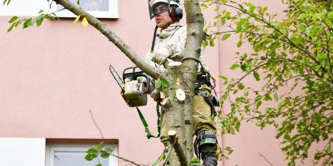 A Beginner's Guide to Tree Pruning, Kalispell, Montana