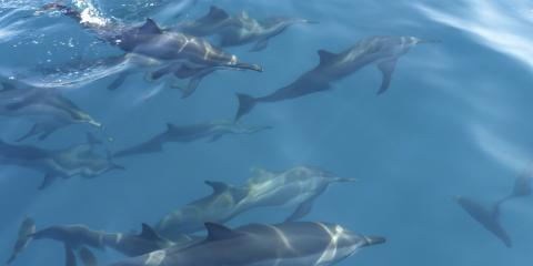 4 Tips for Taking Photos of Dolphins, Ewa, Hawaii