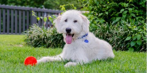 3 Reasons Pet Owners Need Home Fences, Ewa, Hawaii