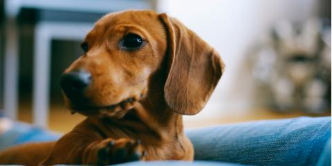 Why Ear Cleaning Should Be Part of Your Dog's Pet Care Routine, Ewa, Hawaii