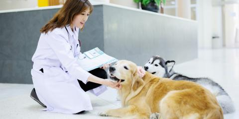 4 Ways to Help Your Dog Relax Before a Vet Exam, ,