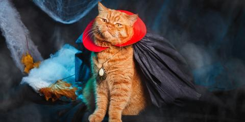 5 Pet Care Tips for Dressing up Safely on Halloween, Ewa, Hawaii