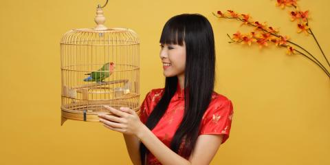 5 Tips for Moving With a Pet Bird, Ewa, Hawaii