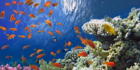 5 Fun Facts About Coral Reefs in Hawaii, Ewa, Hawaii