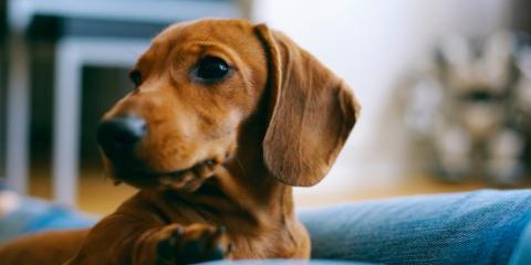 4 Signs Your Dog Is Unhappy , Ewa, Hawaii