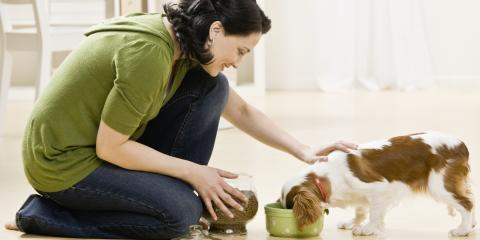 3 Pet Care Tips for Your New Puppy, ,