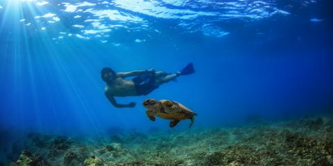 5 Facts About Hawaiian Sea Turtles, Ewa, Hawaii