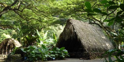 Interested in Hawaiian Culture? 3 Historic Sites to See at Waimea Valley, Koolauloa, Hawaii