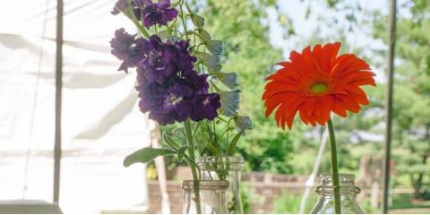 Advice From a Florist: 3 Tips For Keeping Flowers & Plants Healthy, Lexington-Fayette, Kentucky