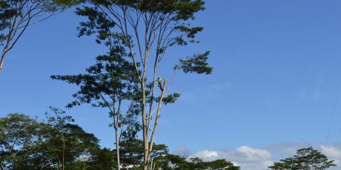 3 Times You Should Hire a Professional Arborist, Keaau-Mountain View, Hawaii