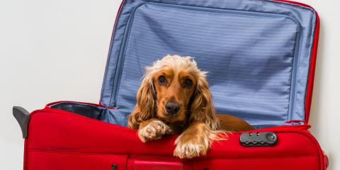 5 Items to Send With Your Dog When Pet Boarding, Keaau, Hawaii
