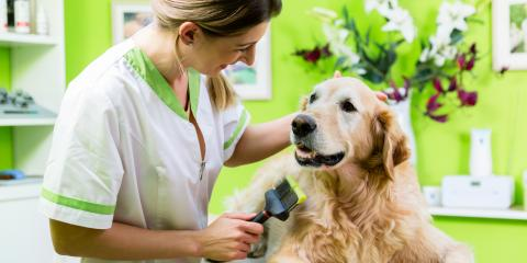 3 Dog Grooming Techniques to Prevent Mats, Keaau, Hawaii