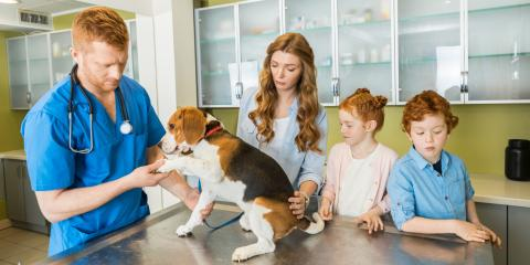 Why it's Important to Vaccinate Your Pets Before Boarding, Keaau, Hawaii