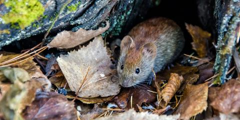 3 Signs You Have Voles in Your Yard, 26, Nebraska