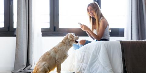3 Heating & Air Conditioning Tips for Pet Owners, 29, Nebraska