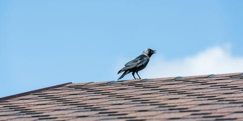 How Do Animals Damage Your Roof?, Kearney, Nebraska