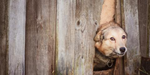 5 Tips for Keeping Your Dog Inside Your Fence, Kenai, Alaska