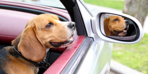 3 Tips to Help Reduce Your Dog's Stress on the Way to Boarding Kennels, Defiance, Missouri