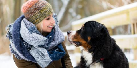 5 Easy Ways to Keep Your Dog Warm & Safe This Winter, Defiance, Missouri