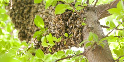 A Simple Guide to Beehives & What to Look Out For, Cincinnati, Ohio