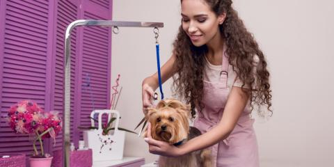Should You Book Summer Grooming Appointments Now?, Elizabethtown, Kentucky