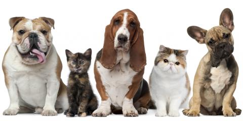 Pet Care Guide: Protect Your Companion From Warm Weather Pests, Nicholasville, Kentucky