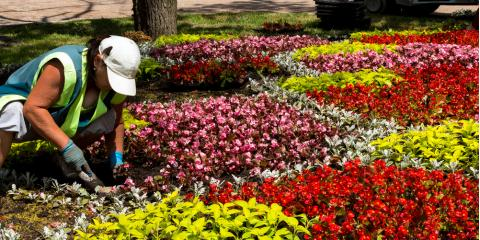 Selecting Spring Flowers to Add Color to Your Landscaping, Lexington-Fayette, Kentucky