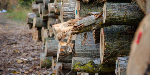 5 Interesting Facts About Lumber, Flemingsburg, Kentucky