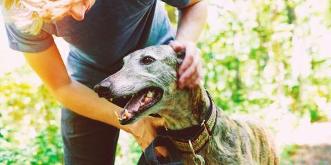 How to Protect Your Dog During Flea & Tick Season, Covington, Kentucky