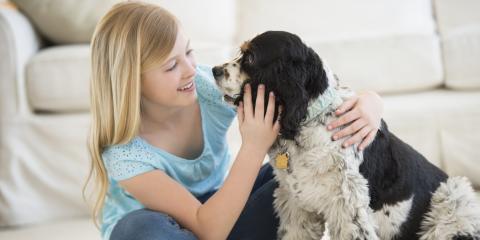 3 Benefits of Giving Your Dog Vaccines, Versailles, Kentucky