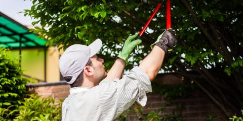 3 Ways Tree Pruning Benefits You & Your Home, Florence, Kentucky