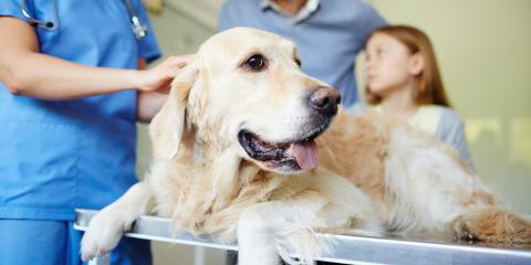 3 Tips to Relieve Your Dog's Anxiety When With the Veterinarian, Florence, Kentucky