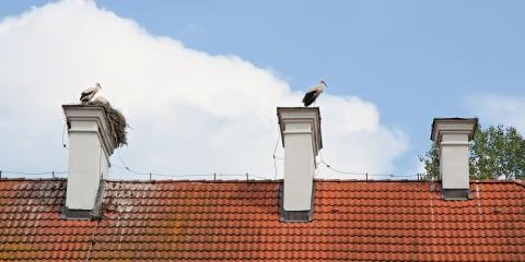 Birds in Your Chimney? 3 Tips on How to Keep Them Away, Kernersville, North Carolina