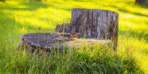 Stump Grinding vs. Stump Removal, Oak Ridge, North Carolina