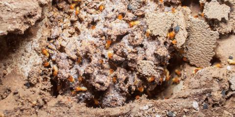 What Are Subterranean Termites?, Kernersville, North Carolina