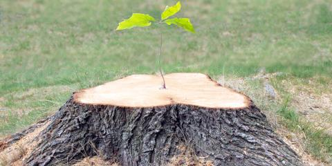 4 Reasons to Invest in Tree Stump Grinding, Abbotts Creek, North Carolina