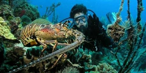 ​The 3 Best Diving Spots on Florida's Atlantic Coast, From Key Largo's Sea Dwellers Dive Center, Key Largo, Florida