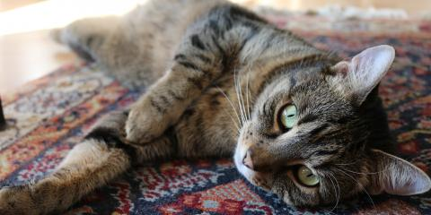 Chronic Kidney Disease in Cats, Branford Center, Connecticut