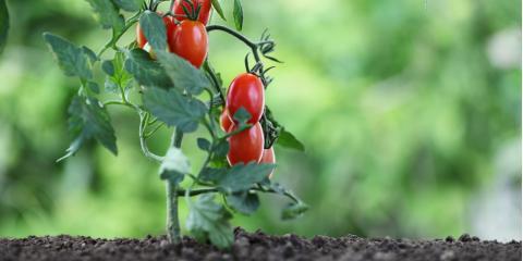 5 Simple Tips for the Beginning Gardener, Kihei, Hawaii