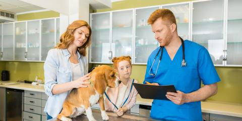 5 Signs You Should Take Your Dog to a Veterinarian, Kingman, Arizona