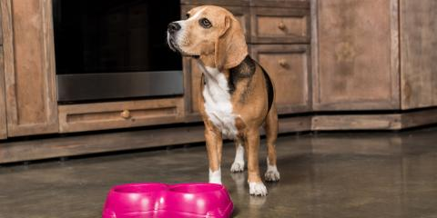 3 Tips for Designing a Pet-Friendly Kitchen, Rochester, New York