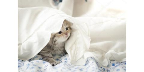 HURRY! NUTMEG CLINIC'S VIRTUAL BED SHEET FUNDRAISER ENDS MONDAY JUNE 15!, Stratford, Connecticut