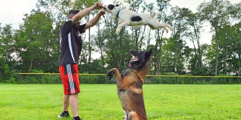 Do you want a well trained dog? Give Him the Skills to Succeed With Krueger K9 Obedience Training, Cincinnati, Ohio