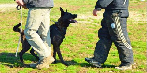 Is Your Dog a Candidate for Protection Training?, Cincinnati, Ohio